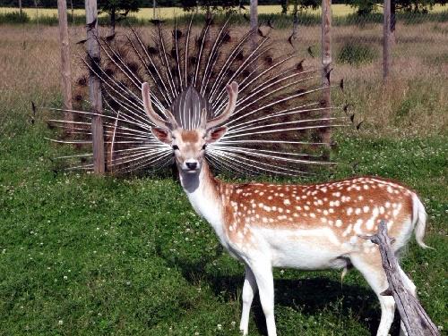 Just a queen deer