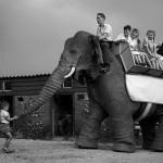 Mechanical Elephant by Frank Stuart