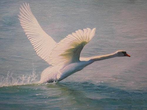 White swan. Painting by Russian artist Vasiliy Kolesnik