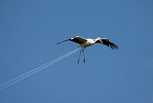 Funny photo of a flying stork