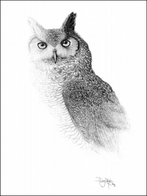 owl, drawing by Doug Landis