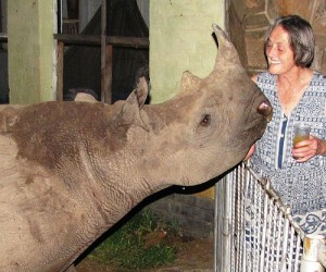 Jimmy, orphaned rhino, whose mother was shot by poachers in Zimbabwe, South Africa