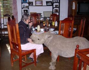 Family's pet Jimmy the rhino