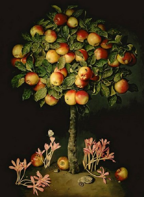 Apple tree with crocuses