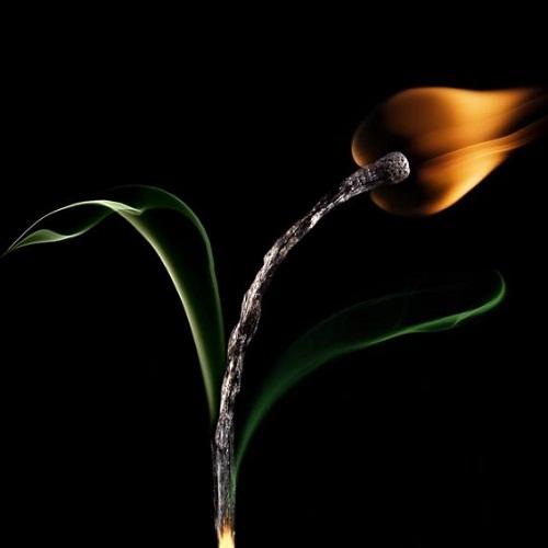 Burnt Matchsticks by Stanislav Aristov