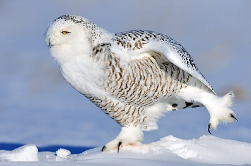 Beautiful bird Owl, photo by Yves Adams