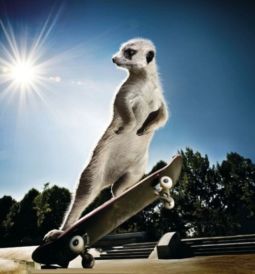 In October the cheeky Timone-type is back on his skateboard