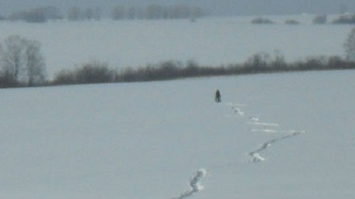 Kemerovo zoologist Oksana Zhukova managed to do a snapshot of Bigfoot