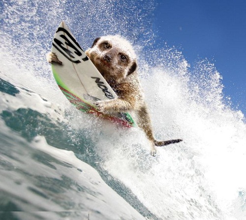 September calls for a cool-off from all that action with a trip to the beach – to hit the waves on a surfboard