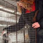 I wish her fox didn't live in a cage… Siberian scientist Irina Mukhamedshina visiting caged animals