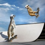 Skaterkats hop onto their boards to show off their skills on a half-pipe