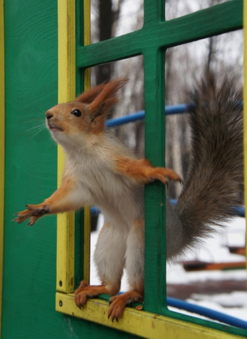 Beautiful Squirrel in St. Petersburg city park