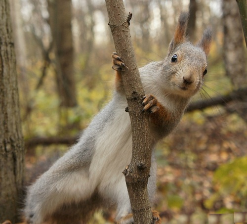 Beautiful Squirrel in St. Petersburg city park