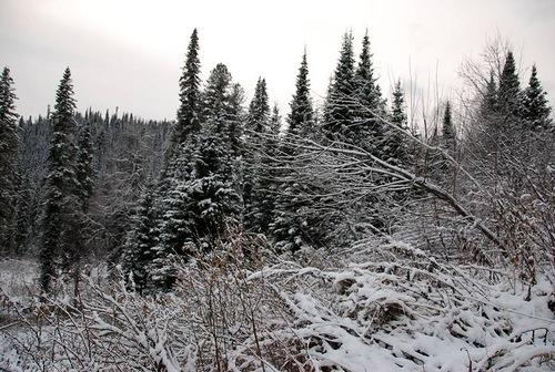 Tashtagol area, Kemerovo region