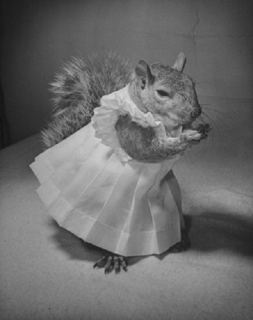Tommy Tucker the squirrel