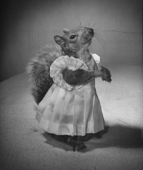 The life of squirrel Tommy Tucker, captured in 1940s by a LIFE magazine photographer Nina Ling