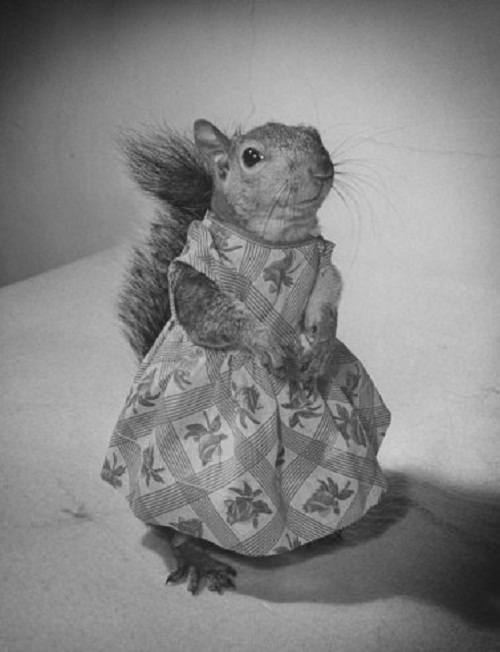 Tommy Tucker the adorable squirrel