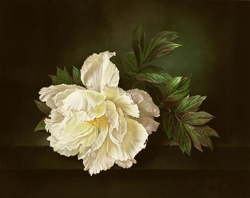 The lone White Peony