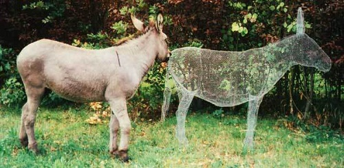 Even real donkey is surprised to see his relative - transparent 3D sculpture by Italian artist Benedetta Mori Ubaldini