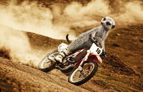 Turning up the heat in July, another adrenalin-seeking critter slips on a pair of motorbike boots and dirtbikes across dangerous terrain.