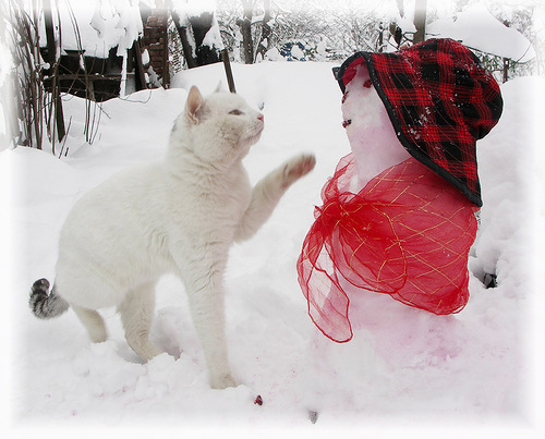 White (city cat) Murzik and a snowman. Photographer Kozandrevna
