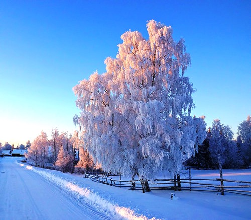 Snow, frost and winter morning. Looking for Santa deer. Wintery photographs by Igor Podobaev. The village of Byzovoj (Byzovaya), Pechora district of the Komi Republic