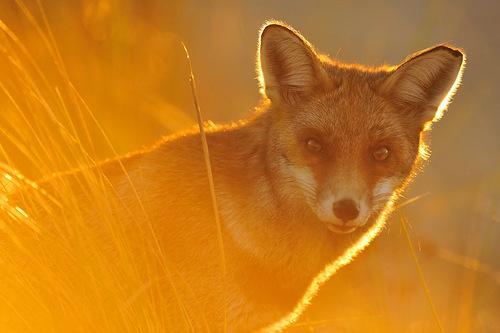 Yves Adams Wildlife Photographer 2012