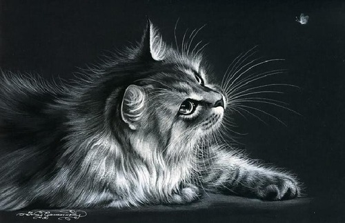 Drawing on a black background. Inspired by cats Russian artist Irina Garmashova (Garmashova-Cawton)