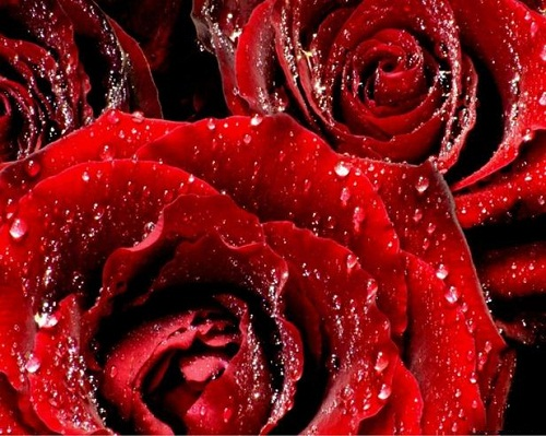 Beautiful Red color symbolic meaning
