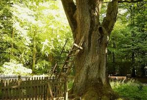 Love letters to a tree. Brautigamseiche, Dodauer Forst, 23701 Eutin