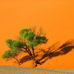 Surreal landscapes of the Namib desert. Photography by Frans Lanting