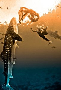 Photo-session with whale sharks