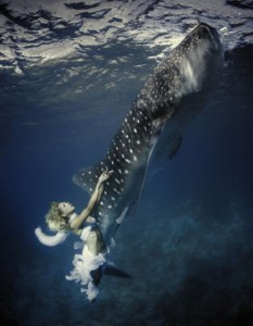 Beautiful fearless underwater models in the shoot with 30-foot-long whale sharks
