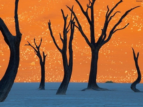 Beautiful Namib desert Surreal landscapes