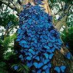 Blue tropical butterflies