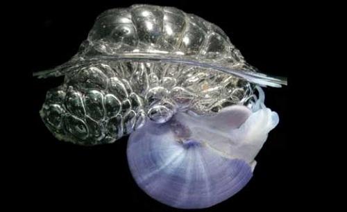 Blue snail jantina