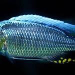 Freshwater ilesi