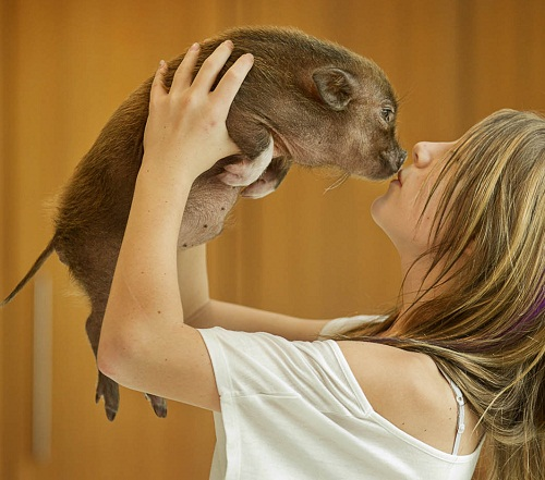 Adorable three-month-old micro mini pig Fergus. Photography by Jay Janner from Austin, Texas