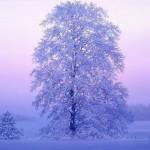Realistic Winter landscapes by Evgeniy Karlovich
