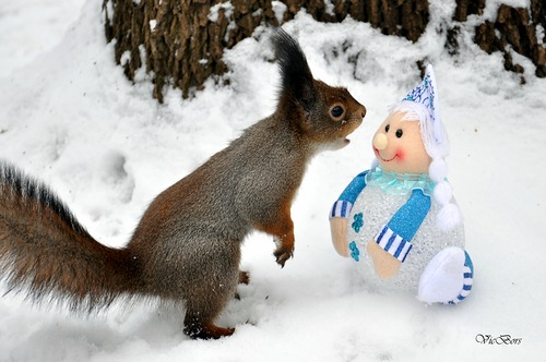 Curious Squirrel and snowmaiden