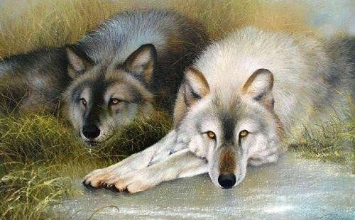 Animals by Evgeny Reva