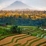 Beautiful Terraced rice fields in Bali