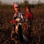 working on cotton plantations children