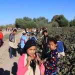 child labor on cotton plantations
