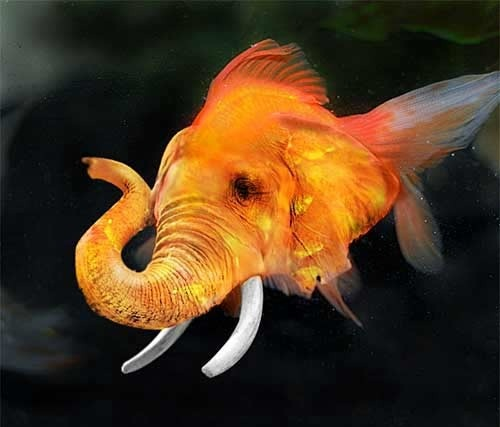 Photoshopped elephant fish