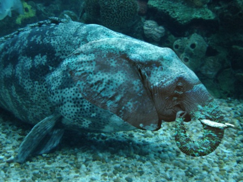elephant fish, work of creative photoshoppers