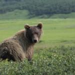 Bear-by-wildlife-photographer-Yuri-Sorokin
