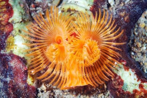 Deep-sea creatures by Alexander Semenov