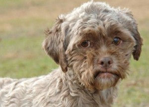 Human faced dog