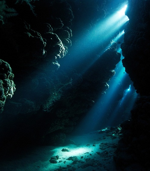 cave. Deep-sea creatures by Russian photographer Alexander Semenov